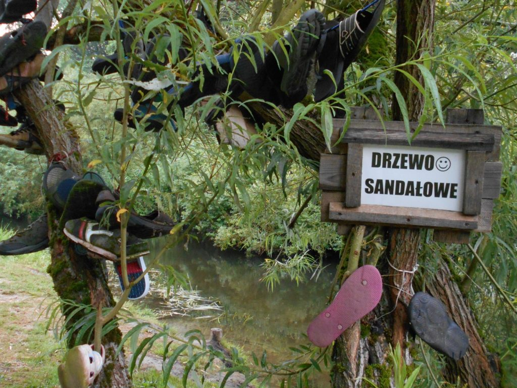 Drzewo sandałowe stworzone przez osoby, które wybrały złe buty na kajaki i zgubiło je w nurcie rzeki.